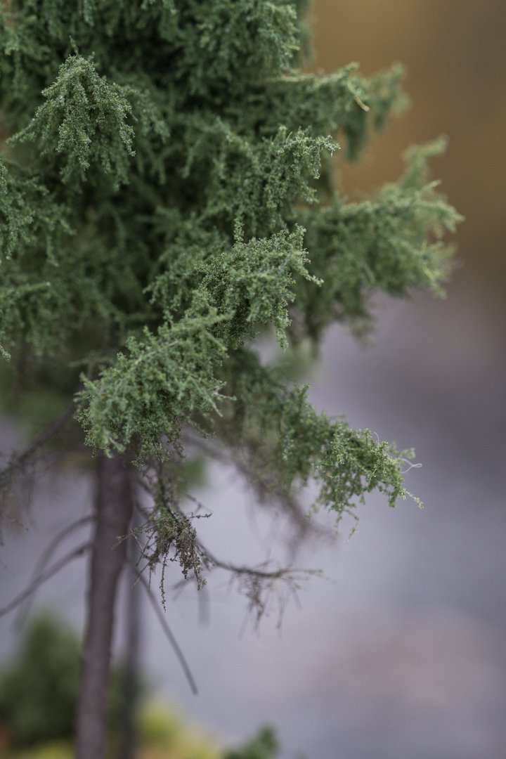 green, forest spruce model trees. Size from 8 to 28 cm. Made from high quality model supplies by Primo Models.