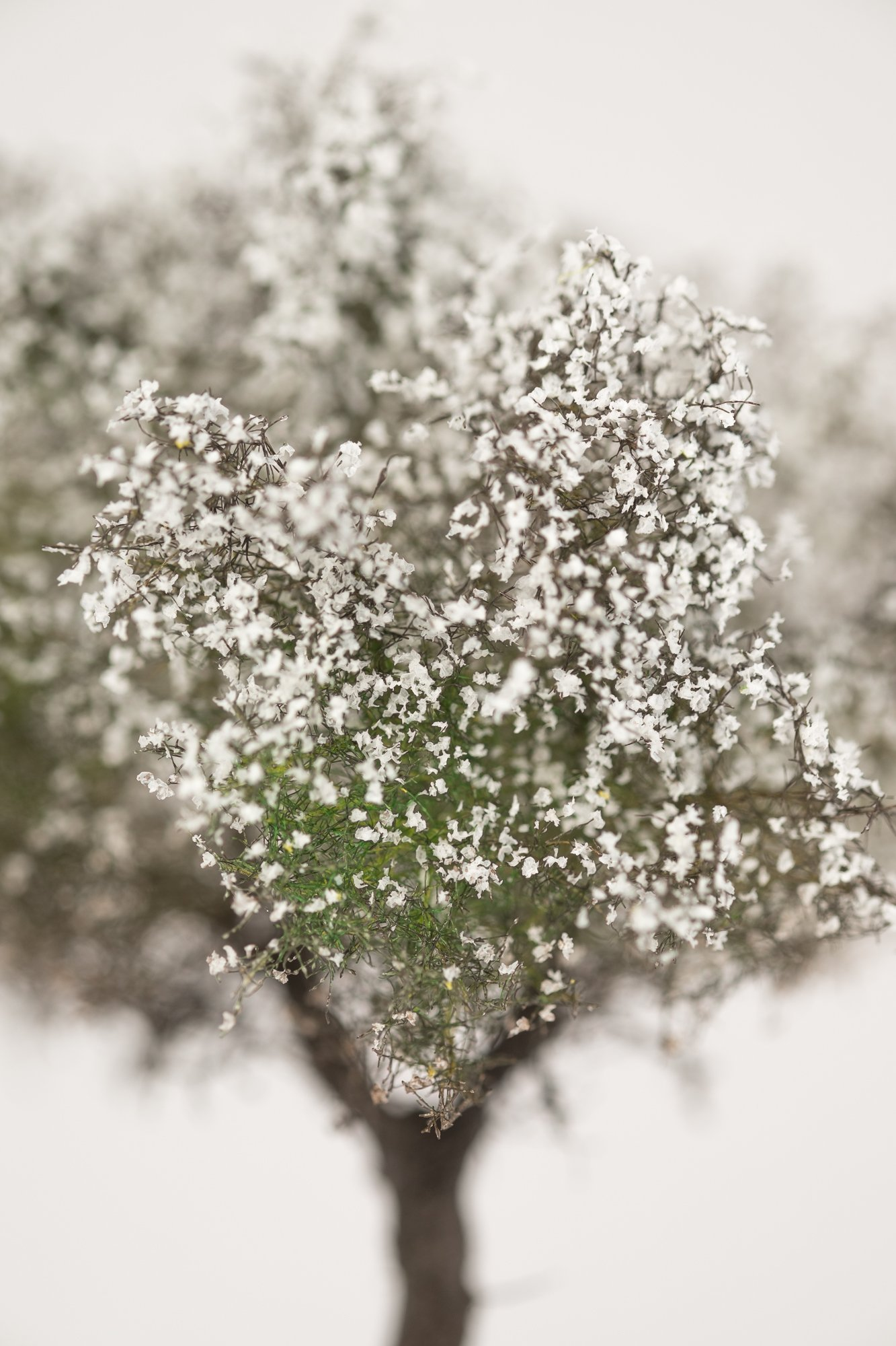 Closeup of white, blooming apple tree model. Made from high quality model supplies by Primo Models.
