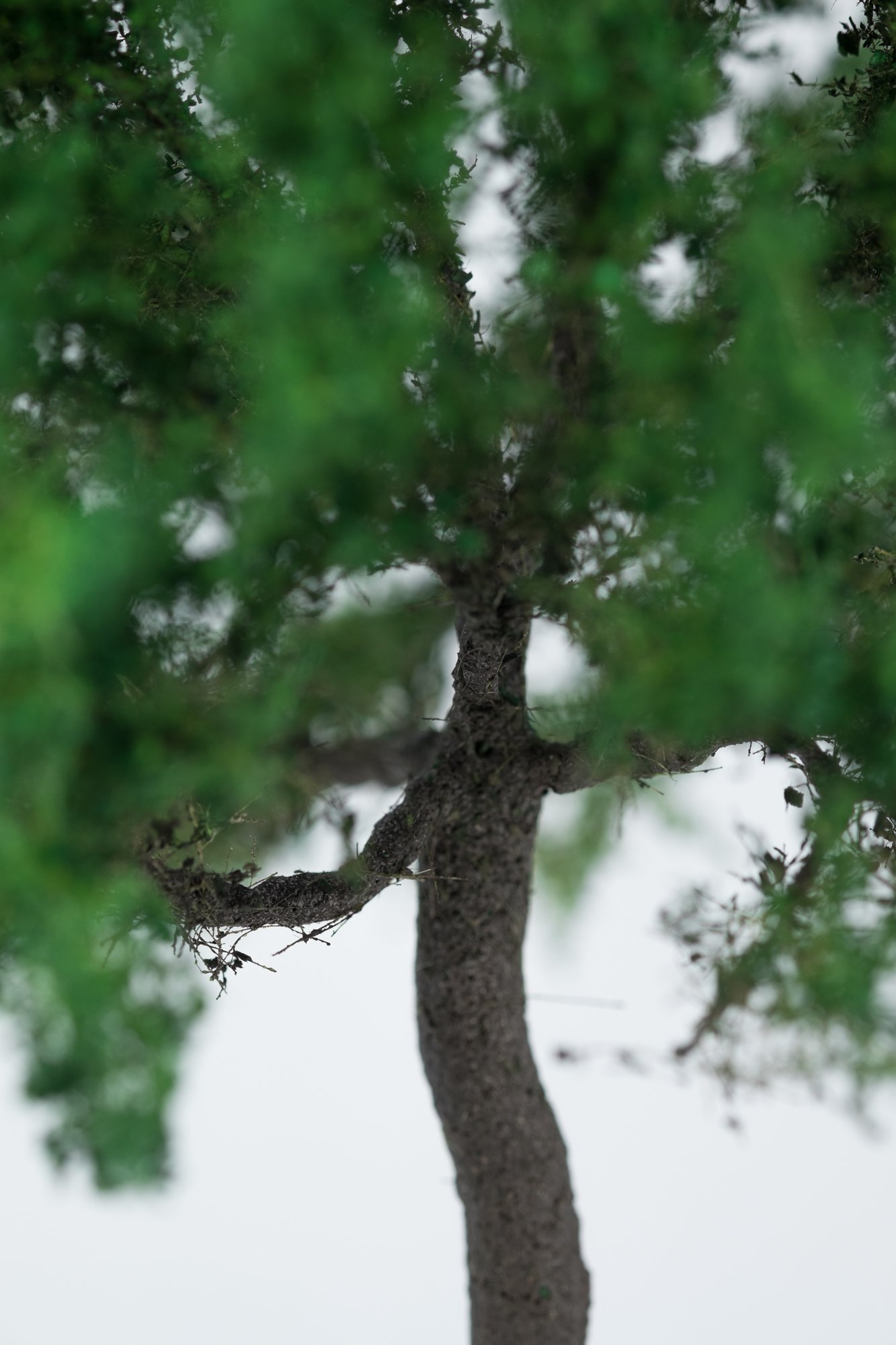 Closeup of chestnut tree model. Made from high quality model supplies by Primo Models.