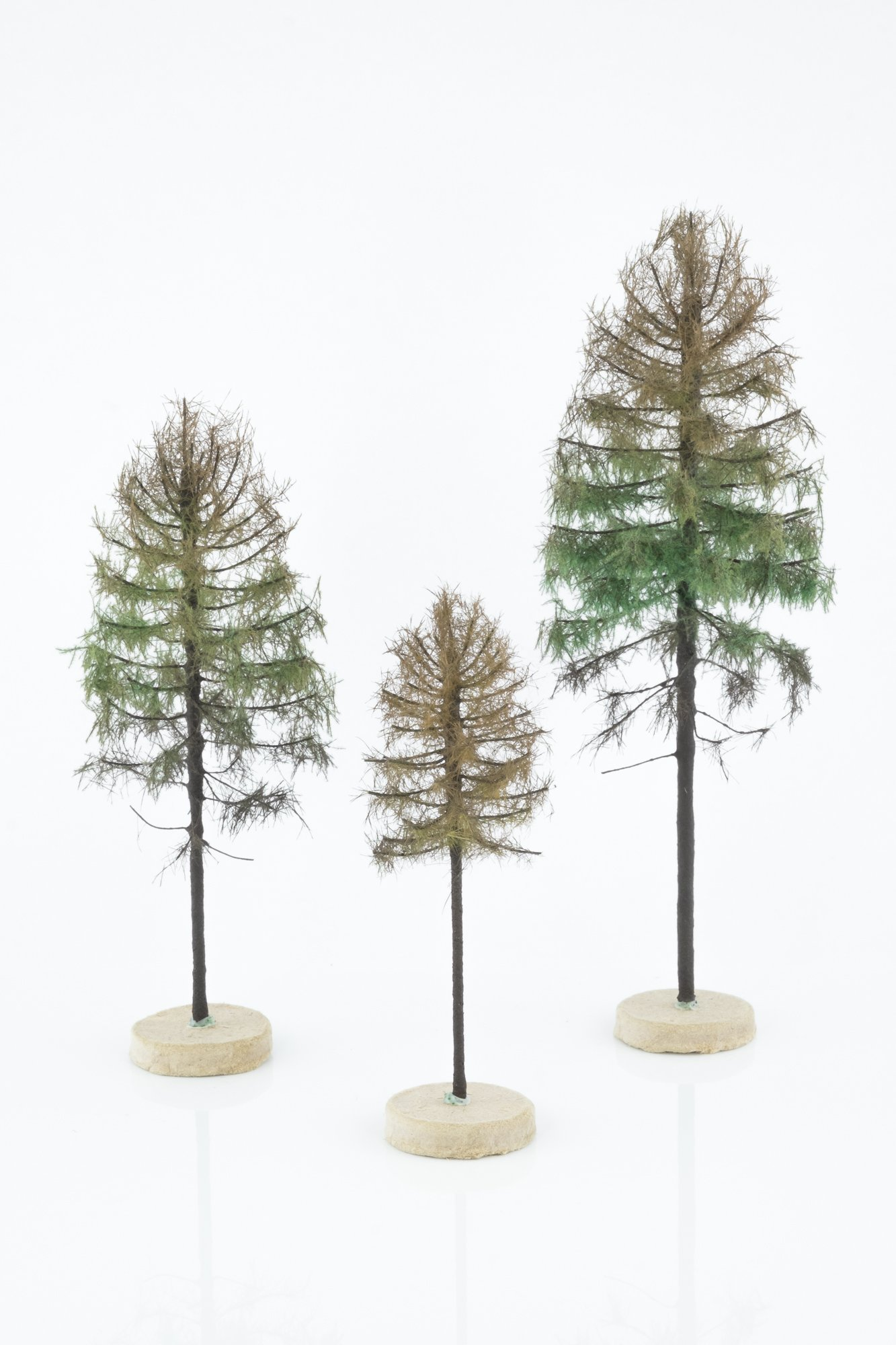 three, dry larch model trees. Size from 8 to 28 cm. Made from high quality model supplies by Primo Models.